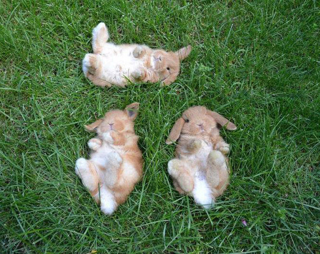 Bunnies in grass