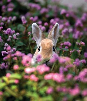 Bunny in the flowers