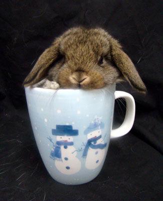 Bunny in a Mug