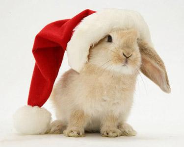 Bunny in a santa hat