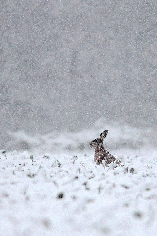 Bunny in a snowstorm