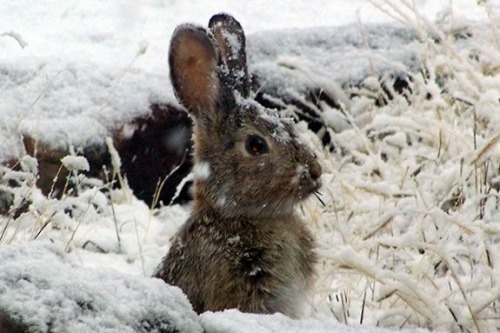 Bunny in the snow and plants