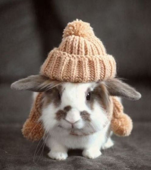 Bunny with a puff beanie