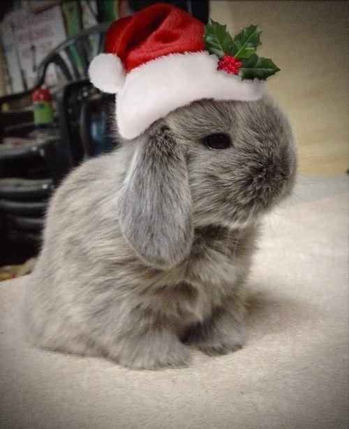 Bunny with a santa hat