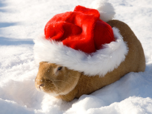 rabbit-in-santa-hat1