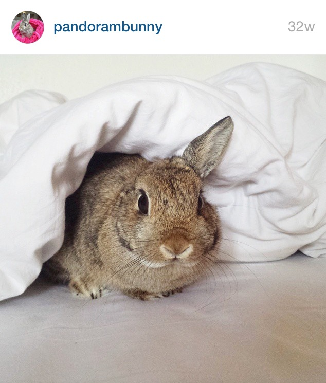 5 Cutest Bunnies on Instagram by Bunny Baubles 1