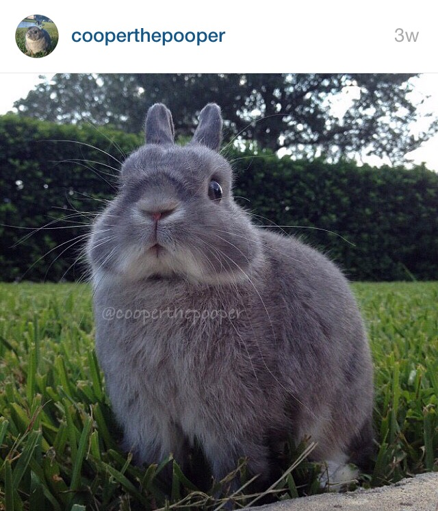 5 Cutest Bunnies on Instagram by Bunny Baubles 2