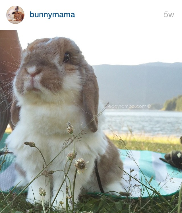 5 Cutest Bunnies on Instagram by Bunny Baubles 3