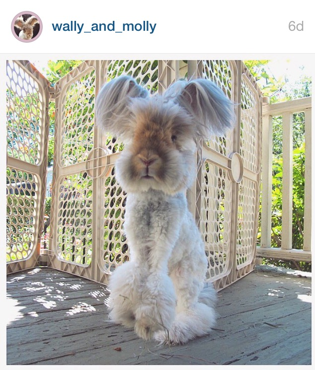 5 Cutest Bunnies on Instagram by Bunny Baubles 4