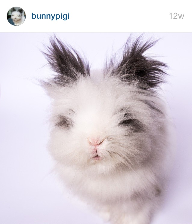 5 Cutest Bunnies on Instagram by Bunny Baubles 5